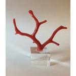 Branche de corail