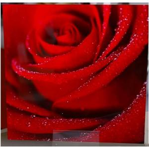 Rose en tableau